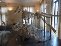 Salone degli scheletri