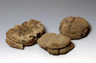 Resti organici di focacce di pane da Ercolano